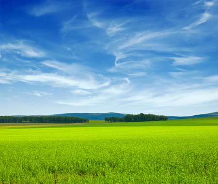 Foto de Beautiful summer landscape. Sky and grass. - Imagen libre de derechos