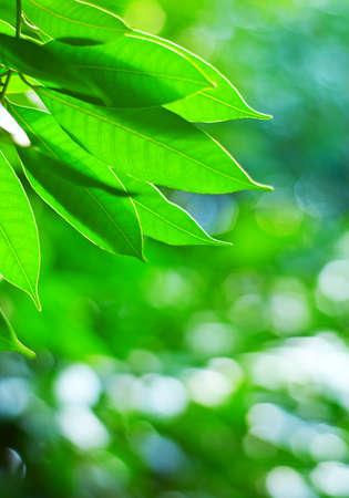 Green spring foliage. Shallow DOF.