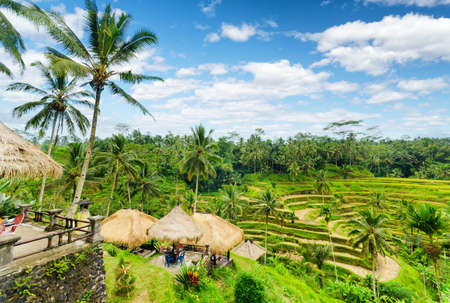 Photo for Ricce terrace of Bali Island, Indonesia. - Royalty Free Image