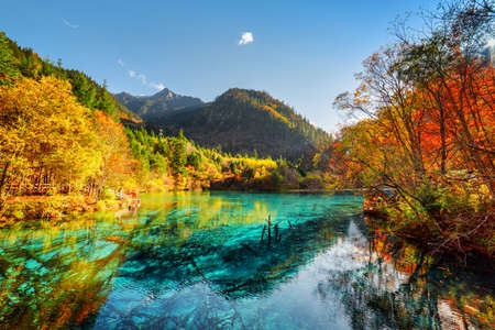 Foto de Amazing view of the Five Flower Lake (Multicolored Lake) with azure water among fall woods in Jiuzhaigou nature reserve (Jiuzhai Valley National Park), China. Submerged tree trunks at the bottom. - Imagen libre de derechos