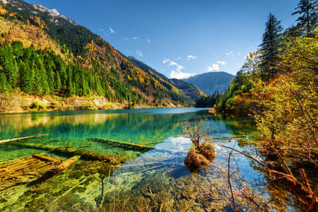 Photo pour Beautiful view of the Arrow Bamboo Lake with crystal clear water among mountains and colorful fall woods in Jiuzhaigou nature reserve (Jiuzhai Valley National Park), China. Sunny autumn landscape. - image libre de droit