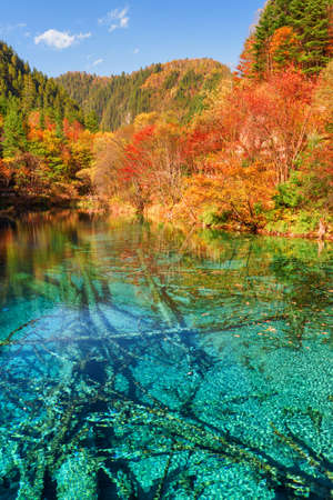 Photo for Fantastic view of the Five Flower Lake (Multicolored Lake) with azure crystal water among colorful fall woods in Jiuzhaigou nature reserve, China. Submerged ancient fallen tree trunks at the bottom. - Royalty Free Image