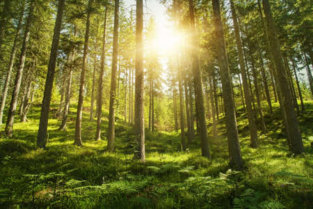 Photo for Sunlight in the green forest - Royalty Free Image