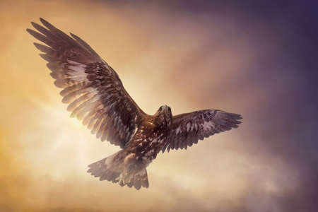 Photo for Eagle flying in the sky - Royalty Free Image