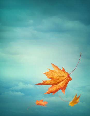 Foto de Autumn falling leaves on blue background - Imagen libre de derechos