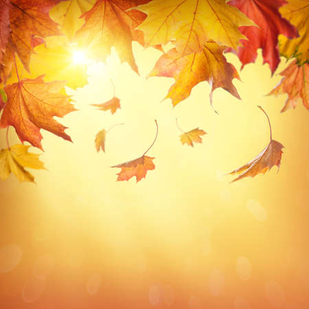 Foto de Autumn falling leaves on colorful background - Imagen libre de derechos