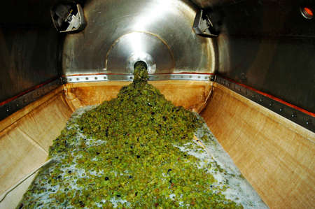 Photo for wine making: pressing of grapes - Royalty Free Image