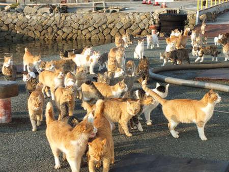 Foto de cats in an island #21 - Imagen libre de derechos