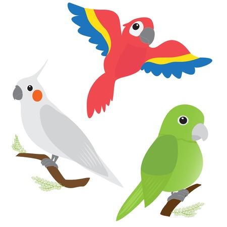 Illustration pour Set of cartoon parrots - macaw, corella, amazon - image libre de droit