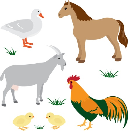 Farm animals vector set 2