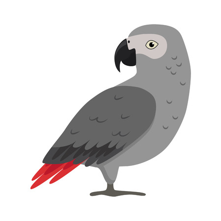 Illustration pour African grey parrot icon in flat style. Exotic tropical bird symbol on white background - image libre de droit