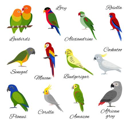 Illustration pour Colorful set of parrot icons - image libre de droit