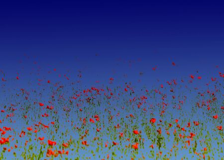 Photo pour Poppy flowers. processing method Rigid mixing blue gradient - image libre de droit