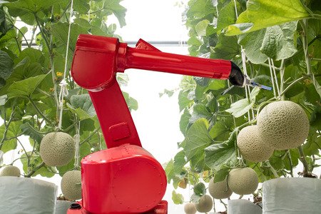 Foto de agritech technology concept, robot use in smart farming or agriculture for aim of improving yield, efficiency, and profitability.it can be products, services or improve various input/output processes. - Imagen libre de derechos