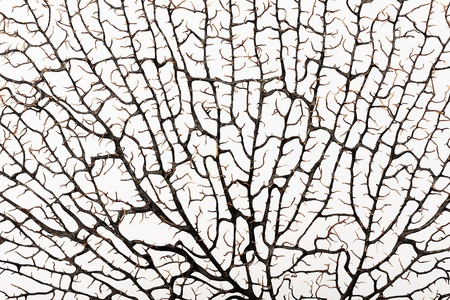 Silhouette of brown coral branch, the texture on a white background