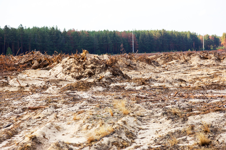 Photo for Deforestation. Uprooting of roots of trees. Chaotic deforestation in country with small economy leads to baldness and climatic natural disasters. Destruction of forest to illegal mining of amber. - Royalty Free Image
