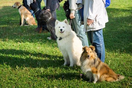 Foto de A group of dogs sitting near their trainers in a dog school - Imagen libre de derechos