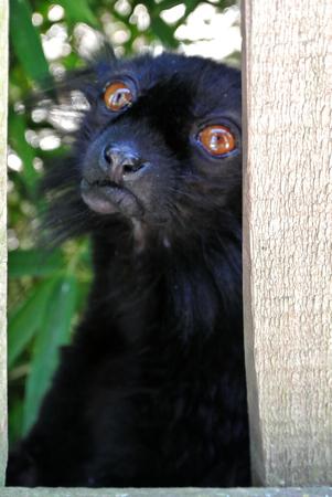 Foto de lemur - Imagen libre de derechos