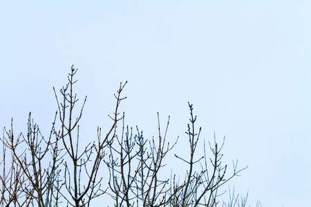 Foto de The branches in the snow. Winter time. - Imagen libre de derechos