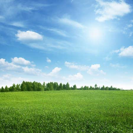Photo pour Beautiful summer landscape. - image libre de droit