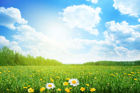 Photo pour Summer meadow on bright sunny day  - image libre de droit
