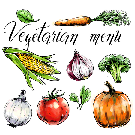 Set of vegetables:c Healthy food for health care and vegetarian menu. Freehand watercolor spinach,carrot,corn,tomato,pumpkin,broccoli. Vector illustration. Black contour, isolated object