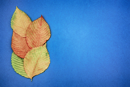 Foto de Autumn multicolored leaves on a blue background. copy space - Imagen libre de derechos