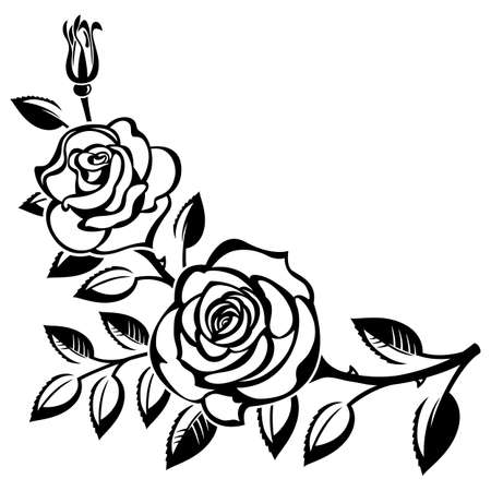 Illustration pour Branch of roses on a white background - image libre de droit