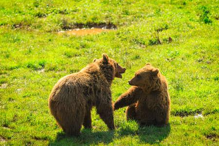 Photo for Bear in Cabarceno Natural Park, Cantabria - Royalty Free Image