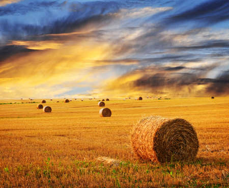 Foto de Golden sunset over farm field with hay bales - Imagen libre de derechos