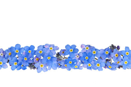 Photo for Arrangement of blue forget-me-not flowers isolated on white background - Royalty Free Image