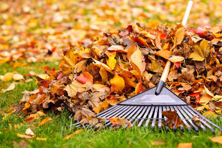 Foto de Pile of fall leaves with fan rake on lawn - Imagen libre de derechos