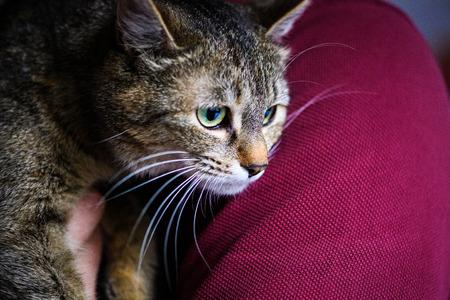 Photo pour Cute adorable cat - image libre de droit