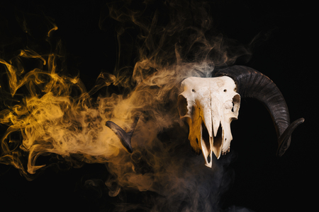 Photo pour Ram skull with horns and yellow smoke, Halloween theme - image libre de droit