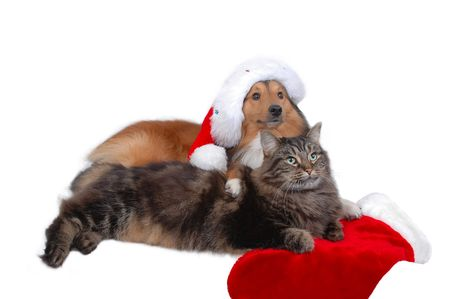 dog and cat friends in christmas time close-up