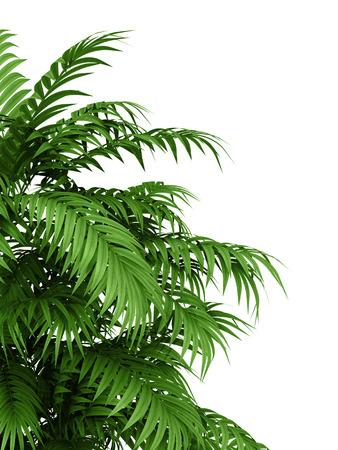 Foto de tropical plant fernleaf hedge bamboo branches on white background, - Imagen libre de derechos