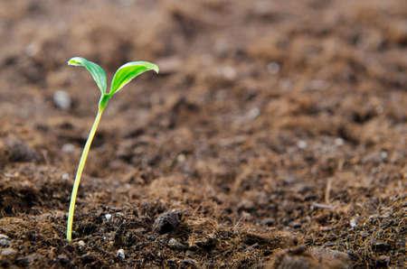 Photo pour Green seedlings in new life concept - image libre de droit