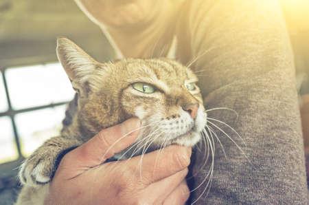 Photo pour tabby fat cat held by a woman at home - image libre de droit