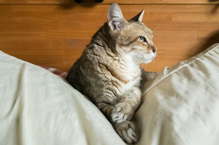 Foto per lazy and funny tabby cat stay on a bed at home - Immagine Royalty Free
