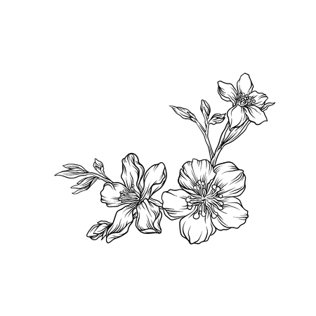 Illustration pour Hand drawn flower branch, monochrome floral design element vector illustration. - image libre de droit