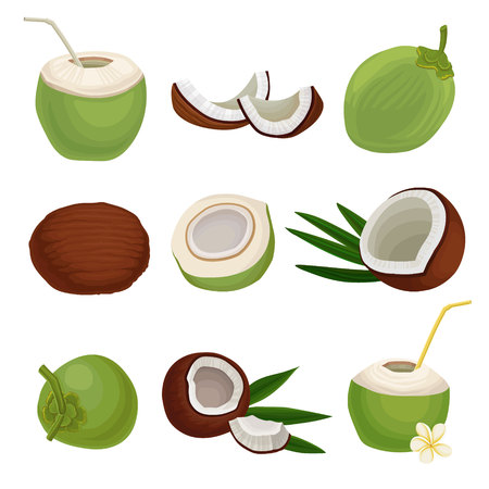 Illustration pour Flat vector set of fresh coconuts. Exotic cocktail. Natural and healthy food. Tropical fruit. Elements for product packaging or poster - image libre de droit