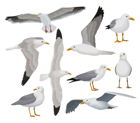 Illustration pour Beautiful seagull set, gray and white sea bird in different poses vector Illustrations on a white background - image libre de droit