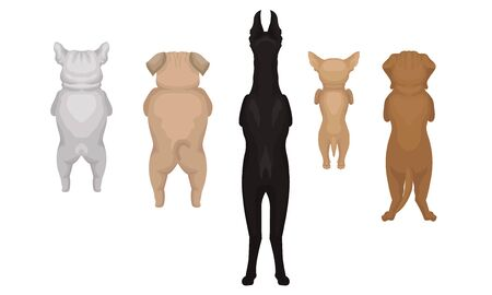 Ilustración de Dogs of the breed Doberman, Bulldog, Pug, Chihuahua are standing on their hind legs. Back view. Vector illustration on a white background. - Imagen libre de derechos