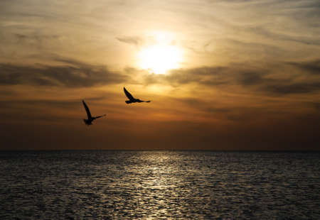 Photo pour Bright sunset panorama with flying birds under the sea surface - image libre de droit