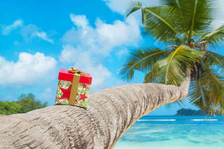 Foto de Gift box with bow on coconut palm tree at exotic tropical beach - holiday presents or discounts for travel tours concept - Imagen libre de derechos