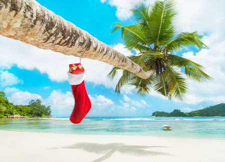 Photo for Christmas sock with gifts on palm tree at exotic tropical beach. Holiday concept for New Years Cards. Seychelles, Mahe - Royalty Free Image