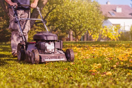 Photo pour Mowing the grass with a lawn mower in garden at early autumn. Mulching the grass at backyard. - image libre de droit