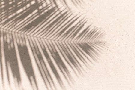 Foto de palm leaves shadow background - Imagen libre de derechos