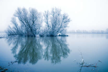 winter landscape scene withe frozen trees in a flooded river