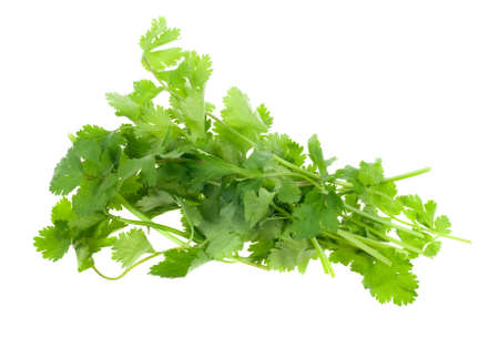 fresh coriander (cilantro) herb isolated on a white background